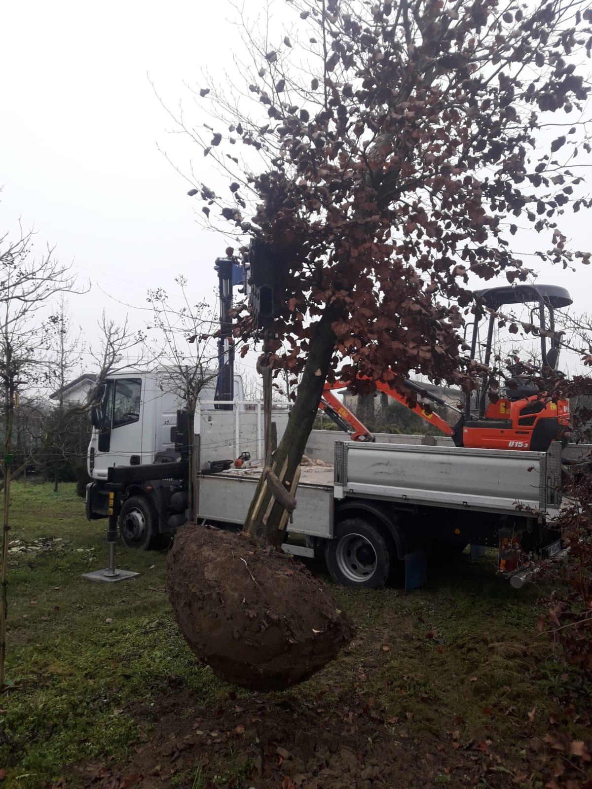 Trasporto albero per Villetta