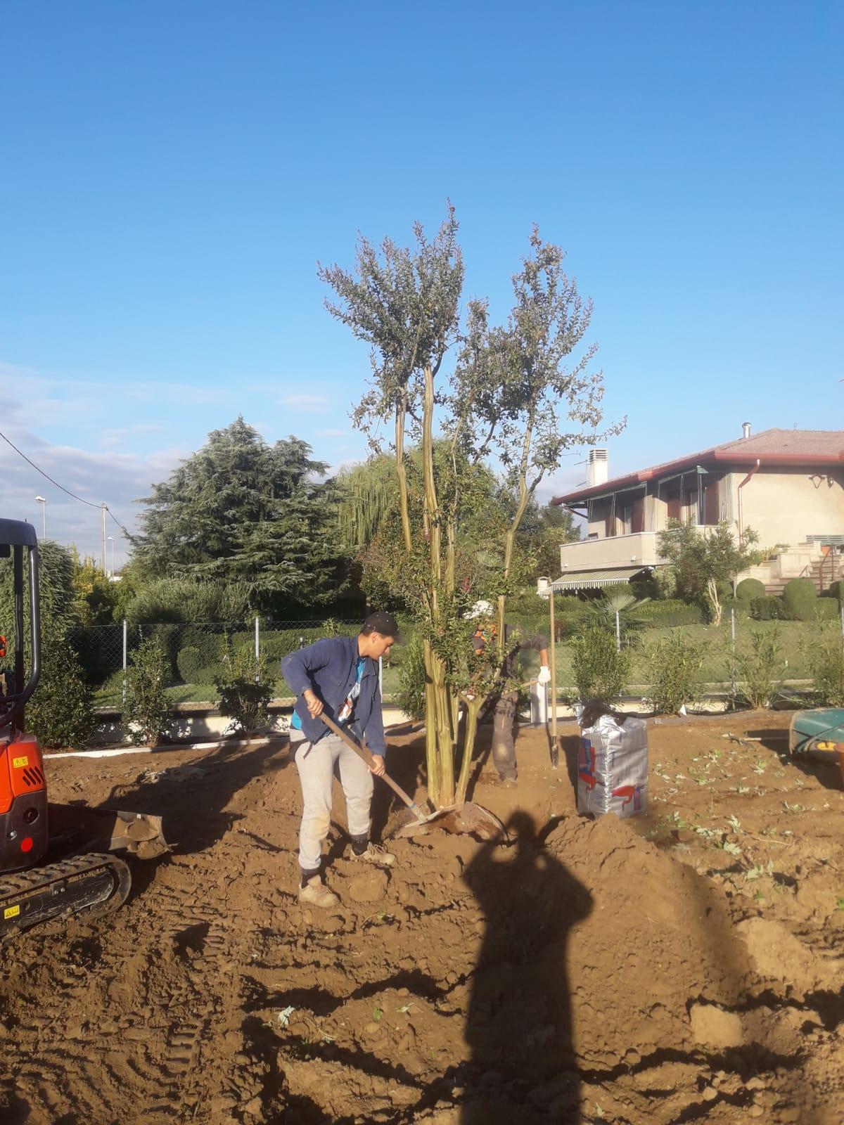Trasporto e piantumazione albero Villetta